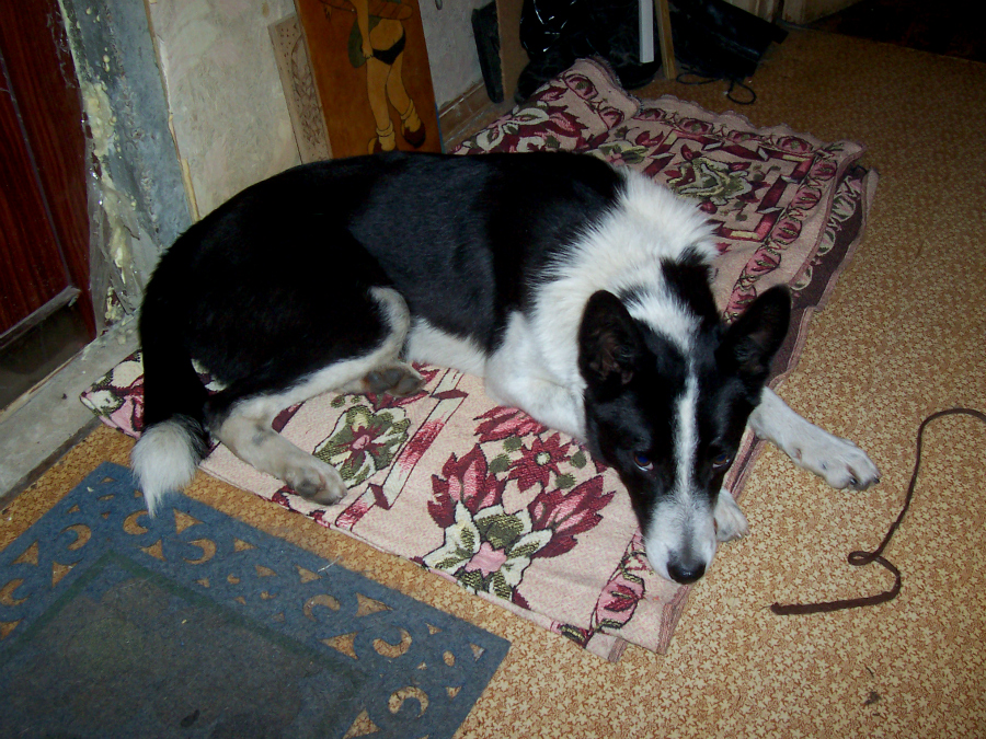 черно-белые фото собаки